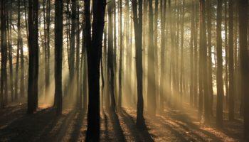 Verlaufen im digitalen Finsterwald